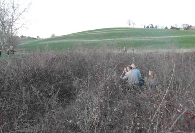 La battuta dei cacciatori per trovare la lupa, la cattura e la cura dell'animale ma non c'è stato niente da fare