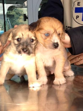 Mamma e cuccioli salvati corrierefiorentino for Nomi per cagnolini di piccola taglia