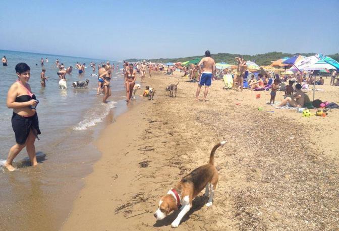 Le migliori spiagge per cani corrierefiorentino - Bagno eugenia lido di camaiore ...
