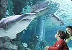 Torna l'acquario! - Dieci milioni di euro di investimento, tremila metri quadri di esposizione, ventuno vasche, 150 specie diverse e migliaia di pesci. Apre (o meglio riapre, dopo 13 anni di chiusura) il 31 luglio l'acquario di Livorno. Sarà il terzo come dimensioni in Italia, dopo Genova e Cattolica.