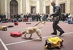 Dimostrazione (a scuola) - I cani antidroga della guardia di finanza fanno una dimostrazione per gli studenti del liceo Galilei (foto Bramo/Sestini)