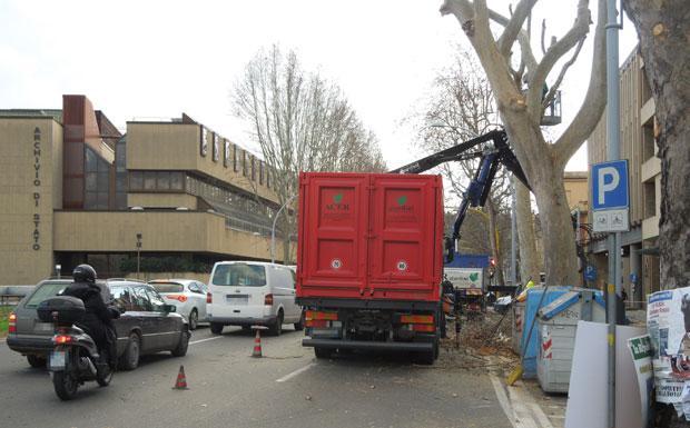 Alberi potati traffico caos foto del giorno corriere - Alberi adatti per viali ...