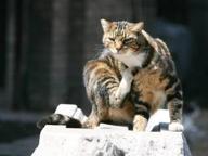 Follonica, raid al gattile: colonia distrutta, micio ucciso a bastonate