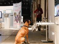 Salute, alla Leopolda i cani che annusano i tumori