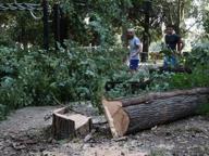 Maltempo, albero cade sui binari Disagi sulla linea Viareggio-Lucca