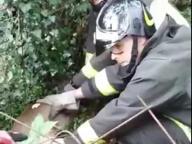 Il daino si incastra nella rete, lo salvano i vigili del fuoco