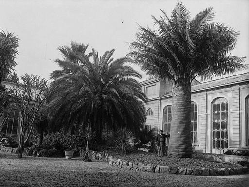 I 470 anni dell orto botanico for Giardino orto botanico firenze