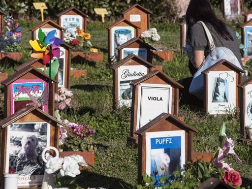 Toscana, ok della giunta: presto cimiteri per gli animali domestici