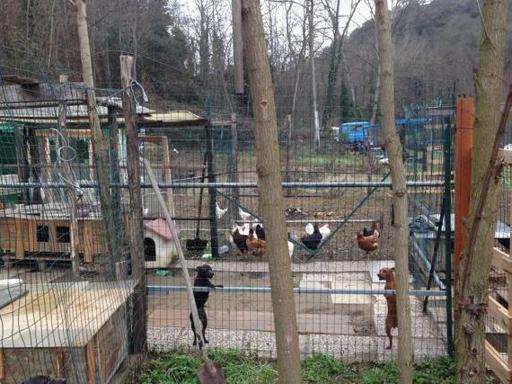 Firenze, gestivano allevamentiabusivi di cani: assolti due allevatori